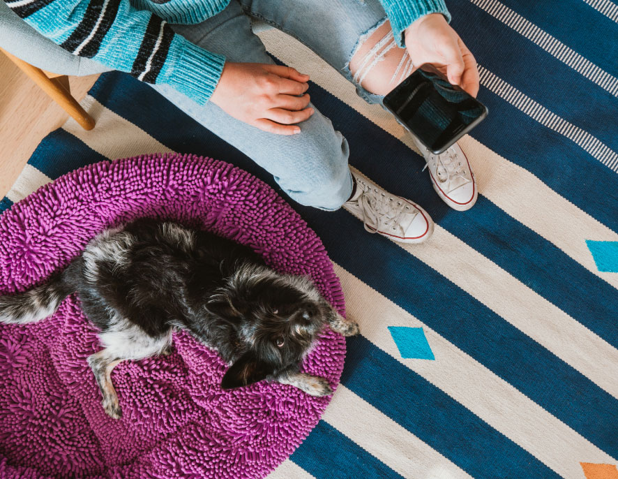 Top-down view of a puppy looking up at the camera while lying on a fluffy pink bed on a striped blue rug next to a person sitting in a chair holding a phone.